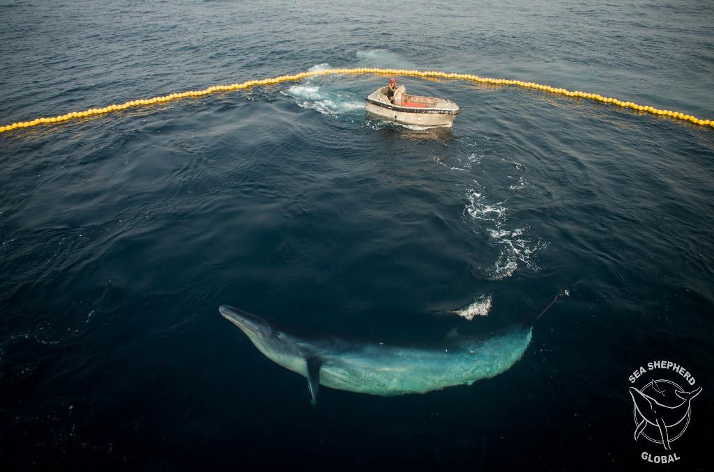 D16_160706-LE-Whale caught in Net-0110format