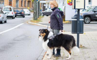 Der Weg zum Blindenführhund